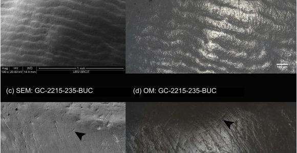 Optical microscopy vs scanning electron microscopy for the quantification of dental microwear